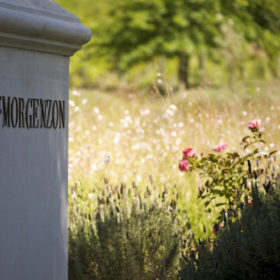 DeMorgenzon-Stellenbosch-0