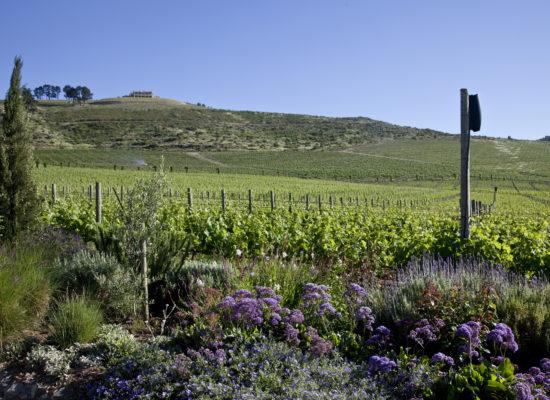 DeMorgenzon-Stellenbosch-3 (2)