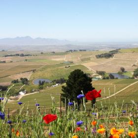DeMorgenzon-Stellenbosch-1